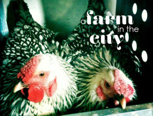 queen's county farm urban farming